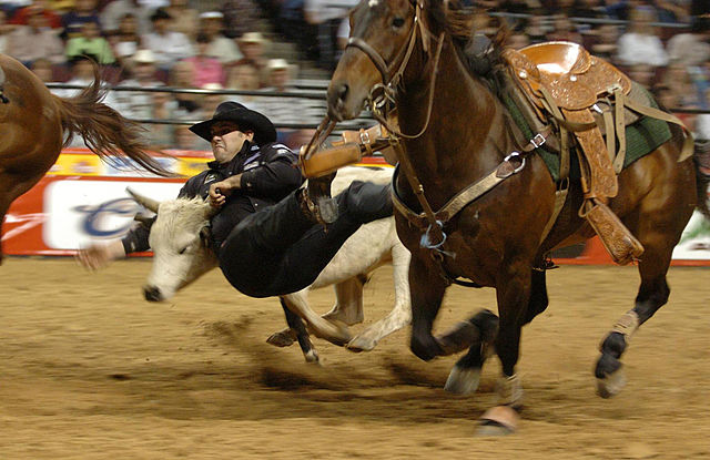 by Cpl. Matt Millham : Steer wrestler Luke Branquinho at the Pace Picante Pro Rodeo Chute Out in Las Vegas - public domain via Wikipedia Commons
