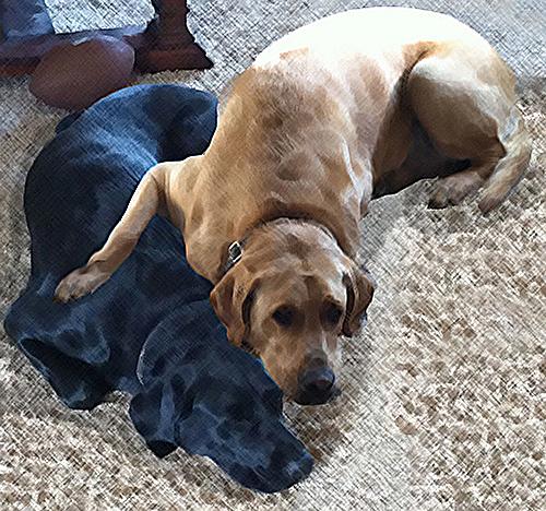 Pups at Rest