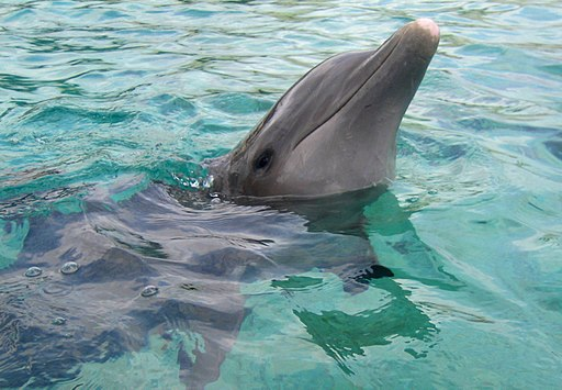 picture of a dolphin